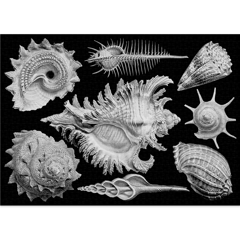 Shells is a 1000-piece puzzle by Cloudberries